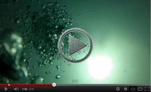 Isle des Phoques seal video
