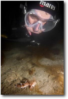 Handfish surveys